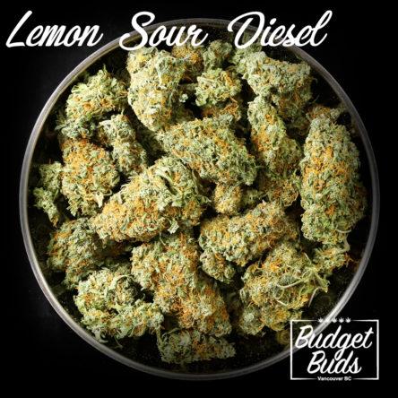 Lemon Sour Diesel