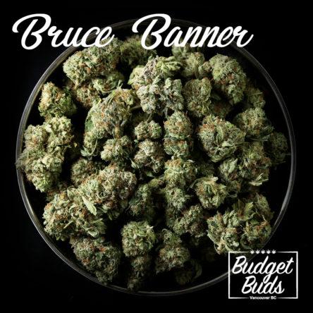 Bruce Banner #2