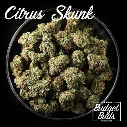 Citrus Skunk