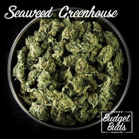 Seaweed Greenhouse