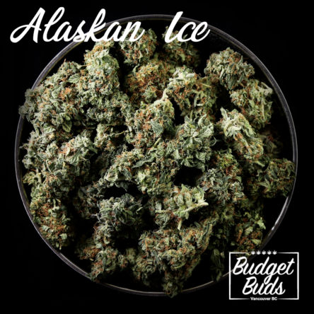 Alaskan Ice